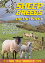 SHEEP BREEDS On The Farm
