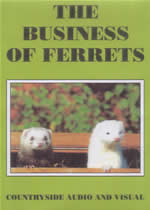 THE BUSINESS OF FERRETS